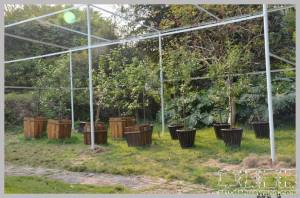 牛顿苹果树的汕大生活:秋天睡觉,冬日发芽